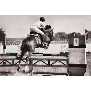 Tableau Jumping 80x120