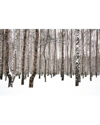 Tableau Forêt 60x90